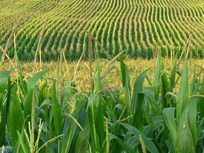 Obama Lowers Ethanol Blending Levels
