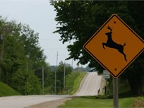 Safety Tip: Avoiding Deer-Vehicle Crashes