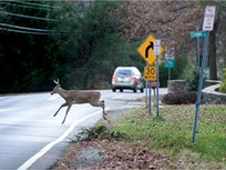 Study Reveals Deer Collision Claims Peak in November
