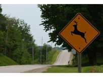 W.Va. Leads Nation in Deer Crashes