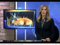 Fleet Safety Video Tip: Preventing Deer Collisions