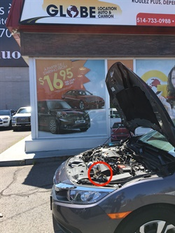 <p><em>A snake was found in a hood of a rental car at a Globe Car Rental location in Montreal.</em></p>