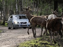 Volvo Developing Technology for Avoiding Collisions With Animals