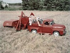 A 1956 Ford F-100 with tractor and combine.