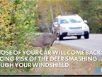 Dealing With a Deer Collision